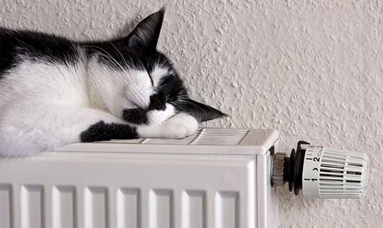 Cat Laying Comfortable On Heated Radiator